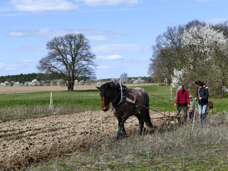 Im Märzen der Bauer ...